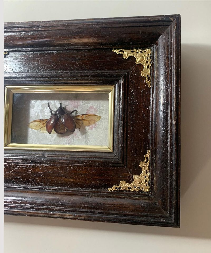 escarabajo xilotrupes Les Morts