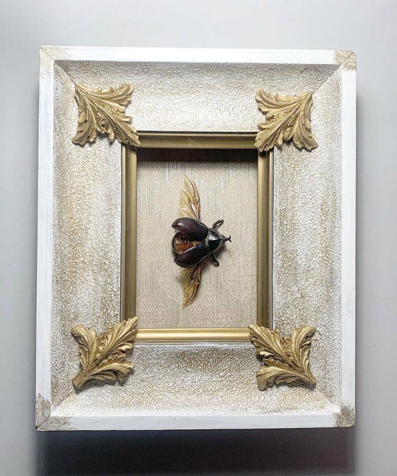 escarabajo xilotrupes gideon